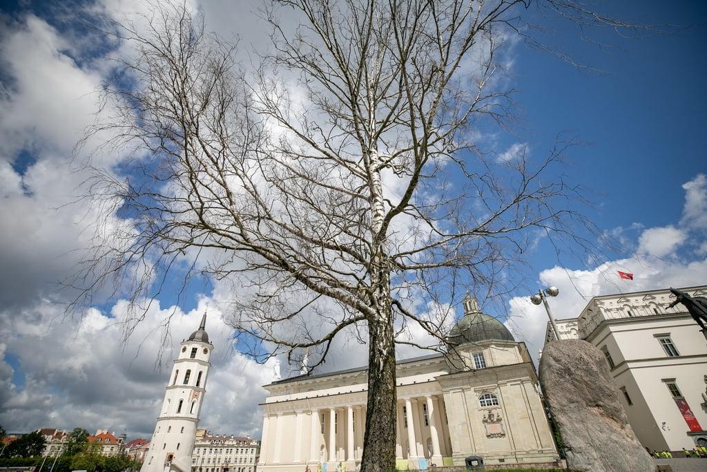 Vilniaus m. sav. nuotr.