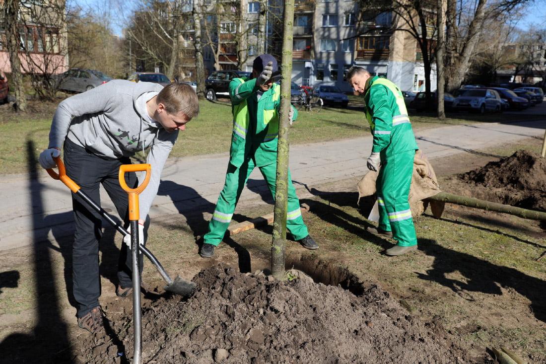 Šiemet Vilniuje bus pasodintas rekordinis skaičius medžių. S. Žiūros nuotr.