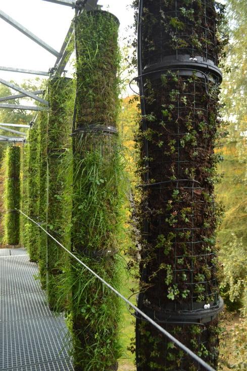 Išorines pastato sienas puošia žaliosios kolonos (E. Turskienės nuotr.)
